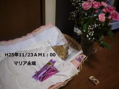 まりちゃん2