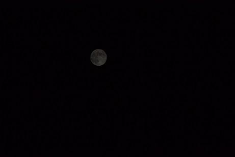 満月(小)