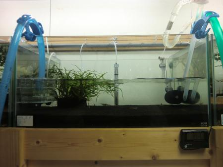 湧き水水槽1