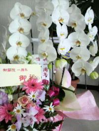 flower+2+(1)_convert_20120405144904.jpg