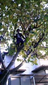 子ザルの木登り