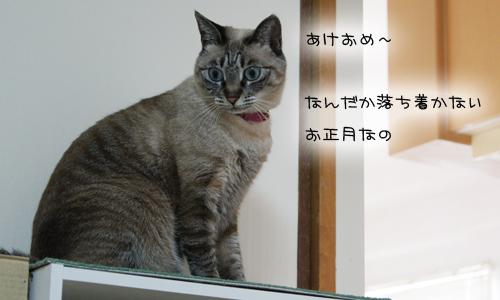 あけおめ26_3