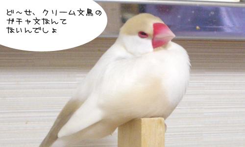 ガチャのクリーム文鳥_1