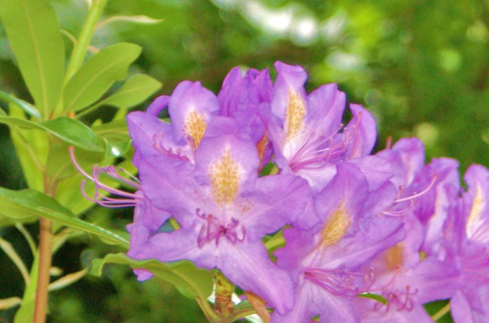 flower2010-6-7.jpg