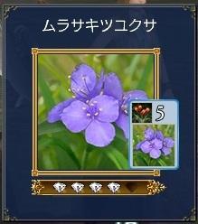 ムラサキツユクサ(トラデス3)