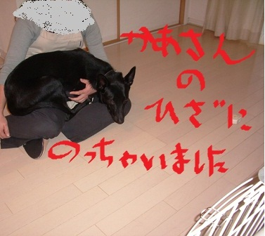 2010_1031_150210-IMGP12181.jpg