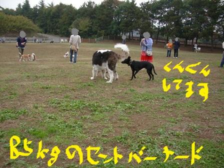 2010_1114_130643-IMGP12841.jpg
