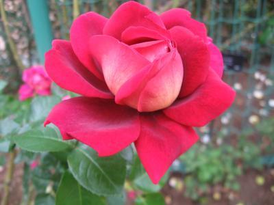 IMG_1548_convert_20111105142522.jpg