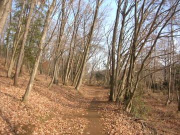 広葉樹のトレイル