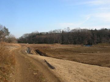 田んぼの脇のトレイル-2