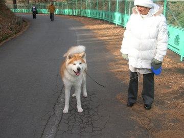 秋田犬のコタロー君