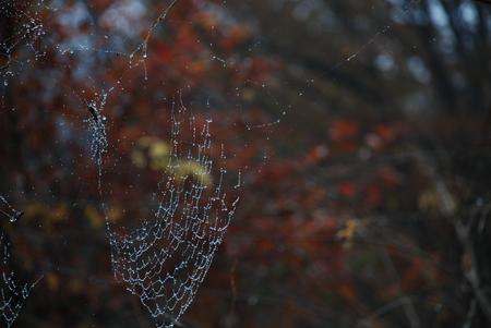 蜘蛛の巣450