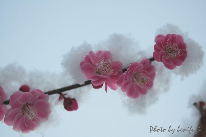 12-03-12-11.jpg