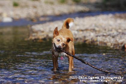 みみ 水遊び003