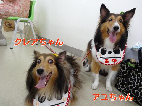 クレアちゃん&アユちゃん