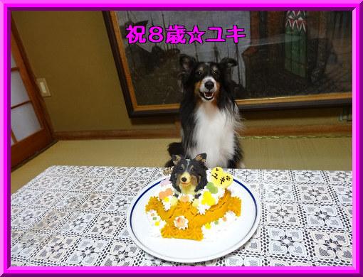 祝8歳☆ユキ