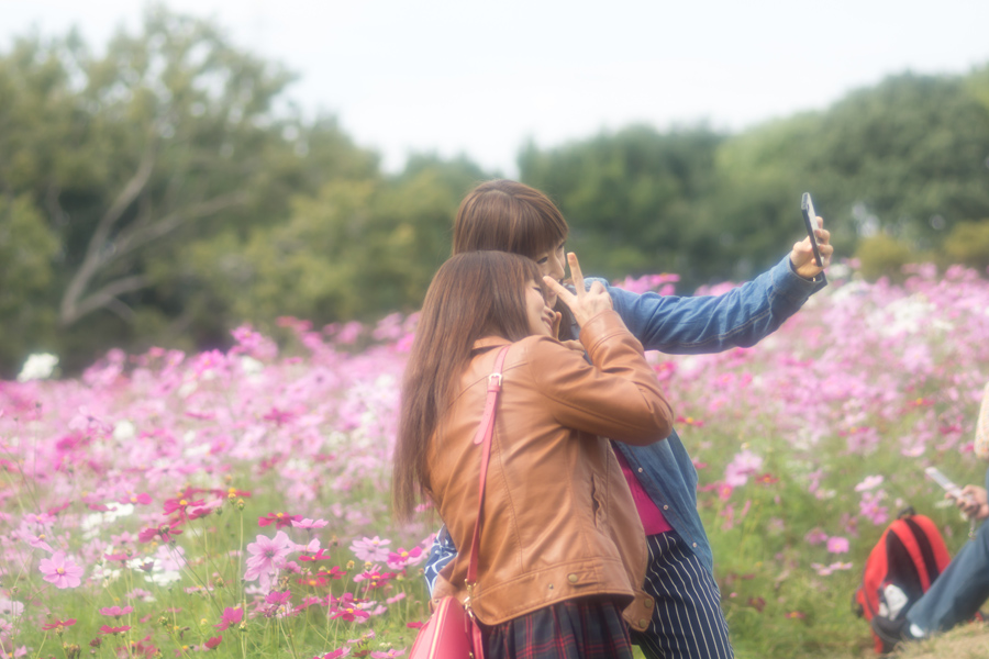 20141110_万博記念公園コスモスフェスタ_1