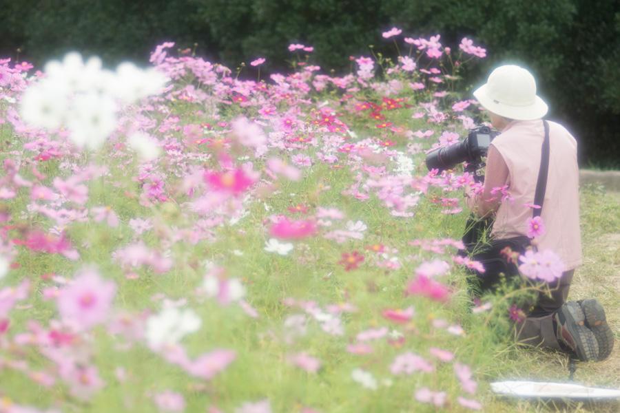 20141110_万博記念公園コスモスフェスタ_2