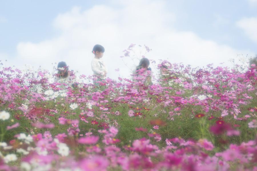 20141110_万博記念公園コスモスフェスタ_3