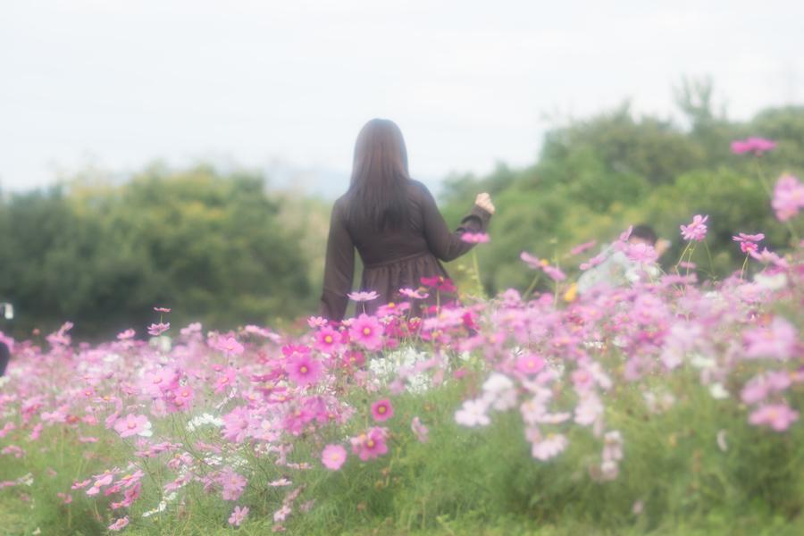20141110_万博記念公園コスモスフェスタ_4