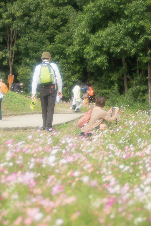 20141110_万博記念公園コスモスフェスタ_9