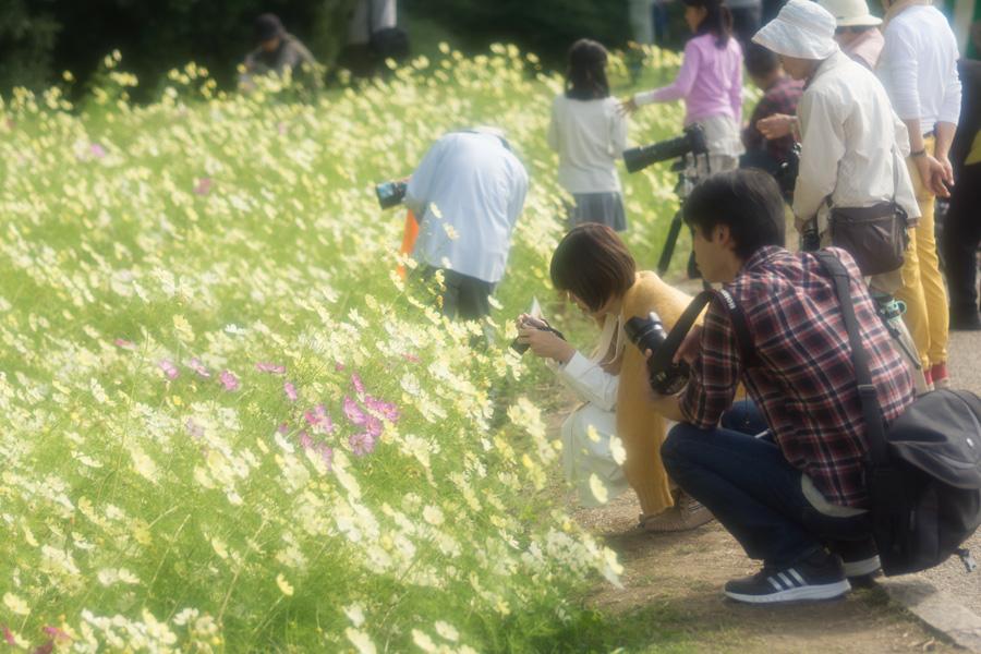 20141110_万博記念公園コスモスフェスタ_10