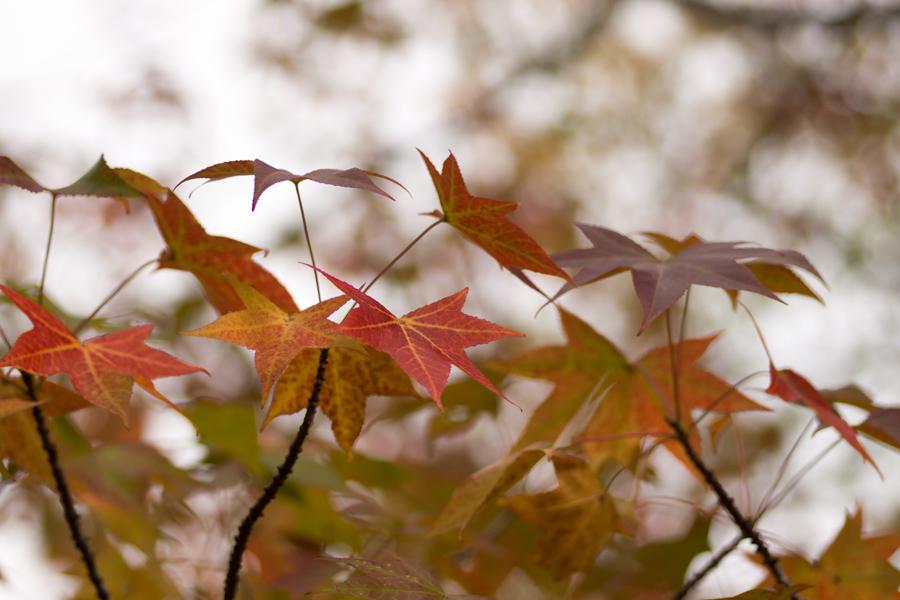 20141130_万博記念公園_秋_5