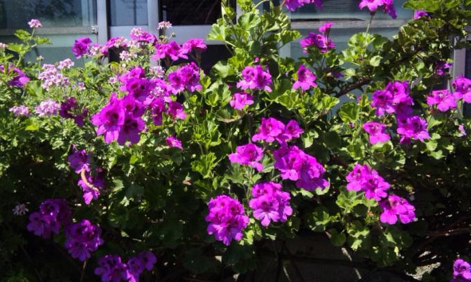 Flowers_20110519