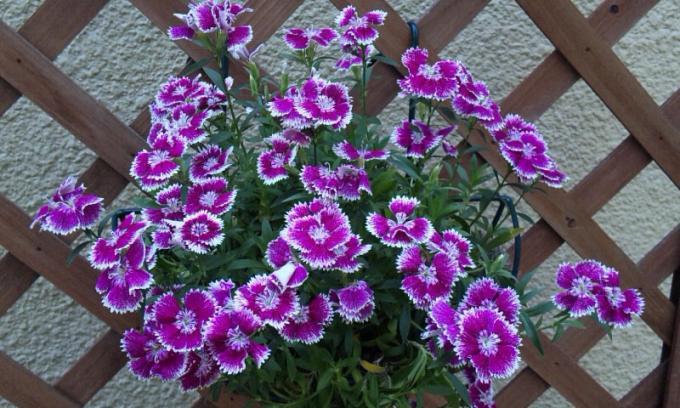 Flowers_20110520