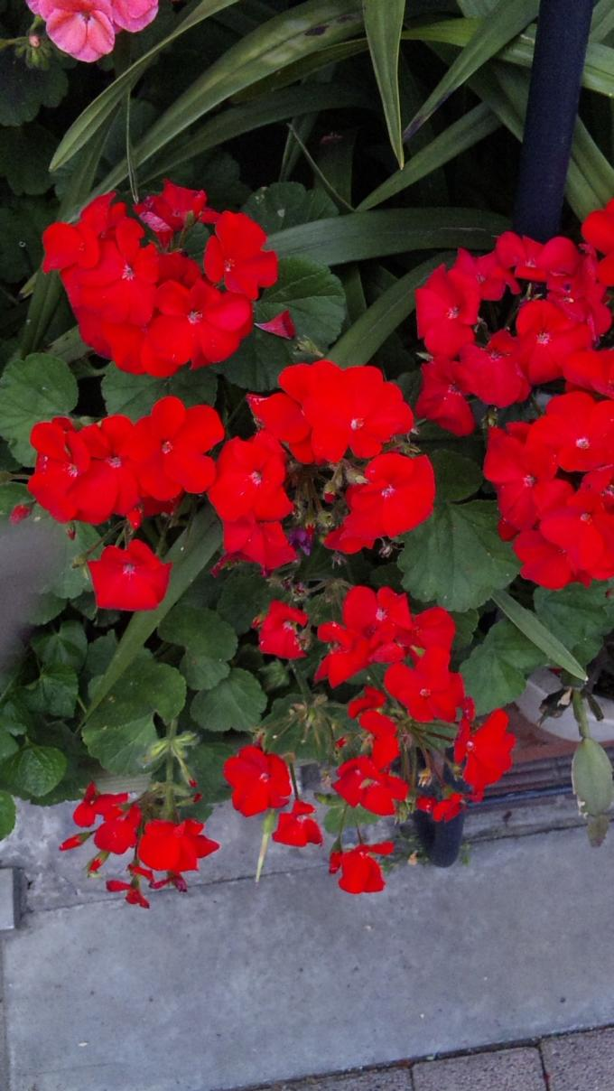 Flowers_20110522