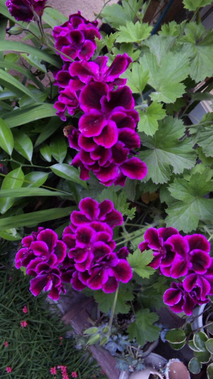 Flowers_20110523