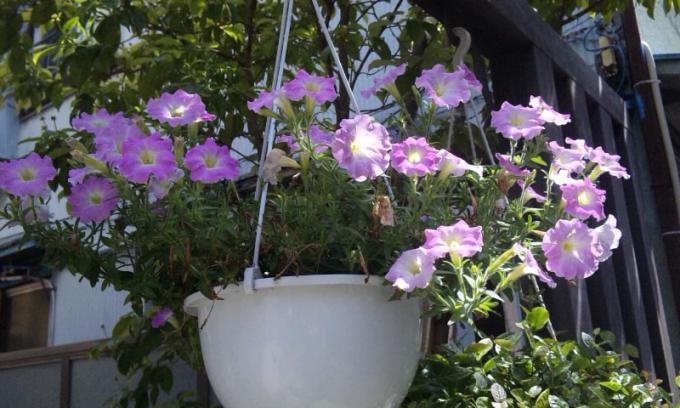 Flowers_20110525
