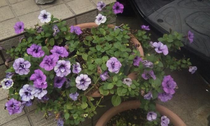 FLOWER_20130725