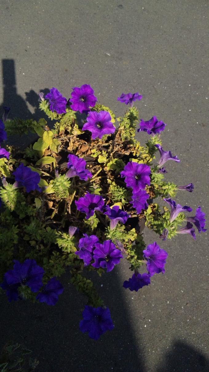 FLOWER_20130726