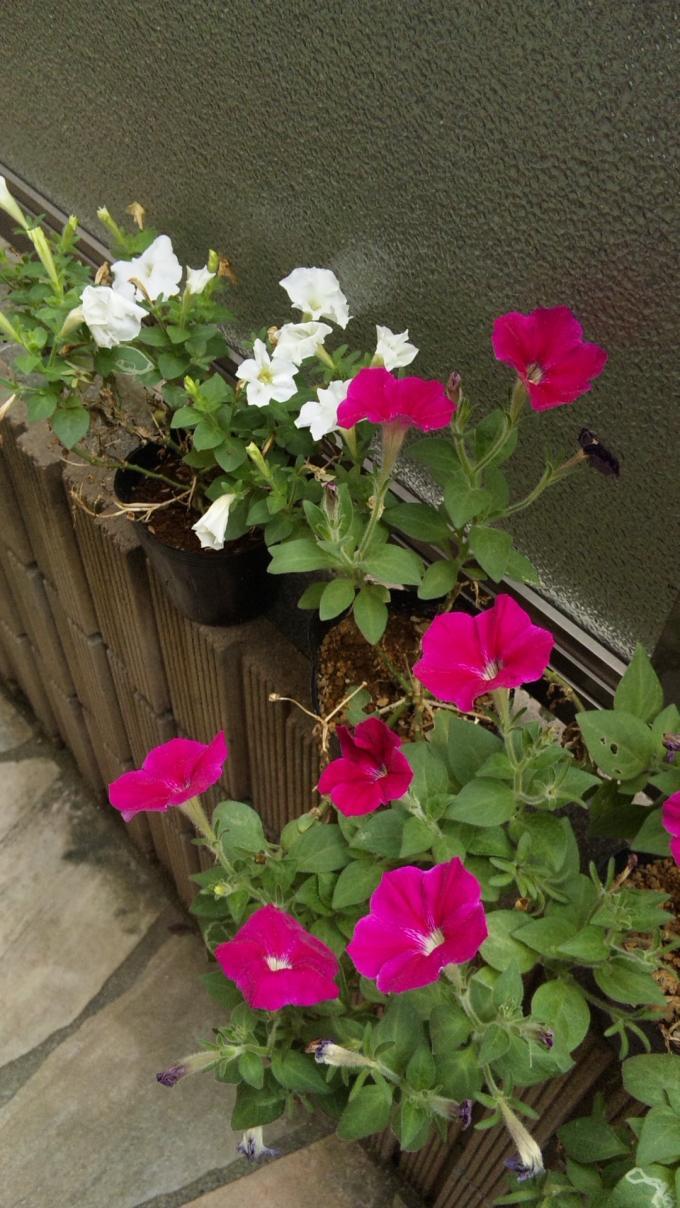 FLOWER_20130727
