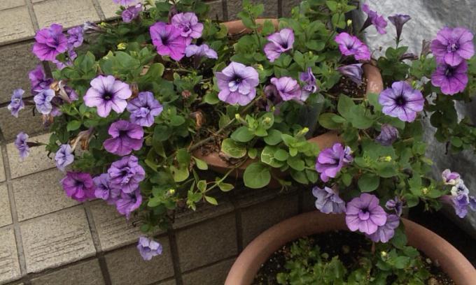 FLOWER_20130730