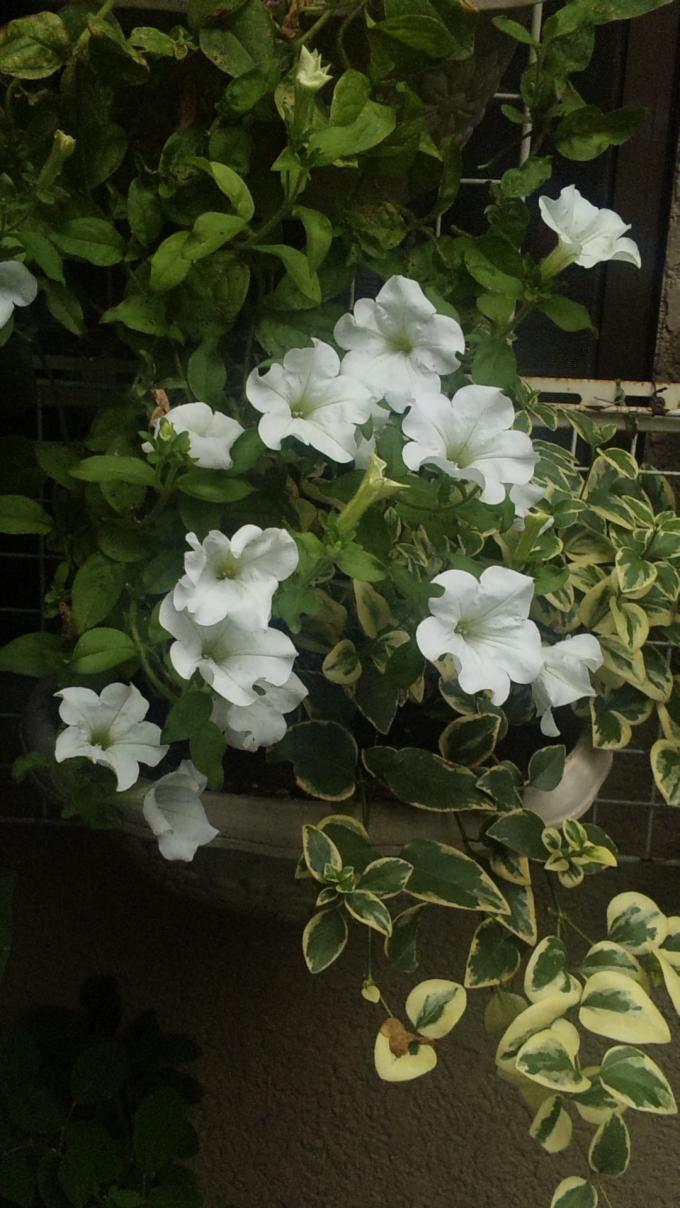 FLOWER_20130731