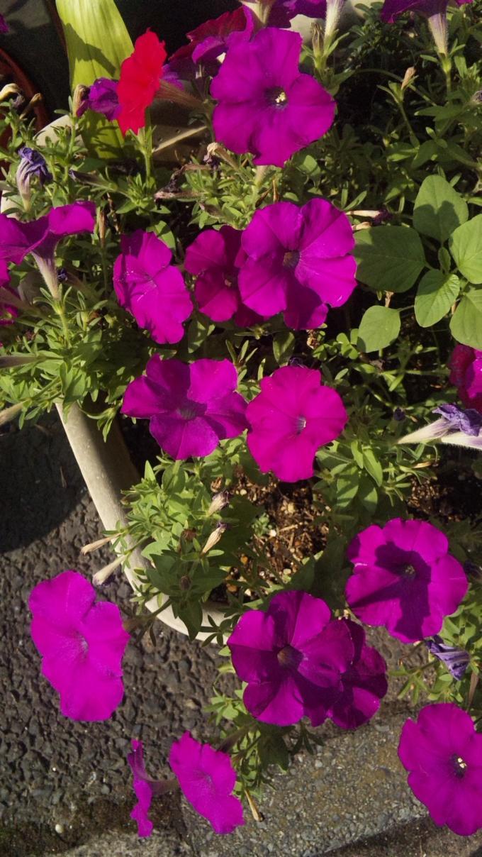 FLOWER_20130801