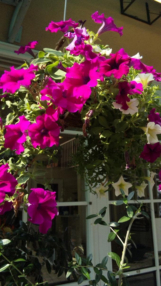 FLOWER_20130803