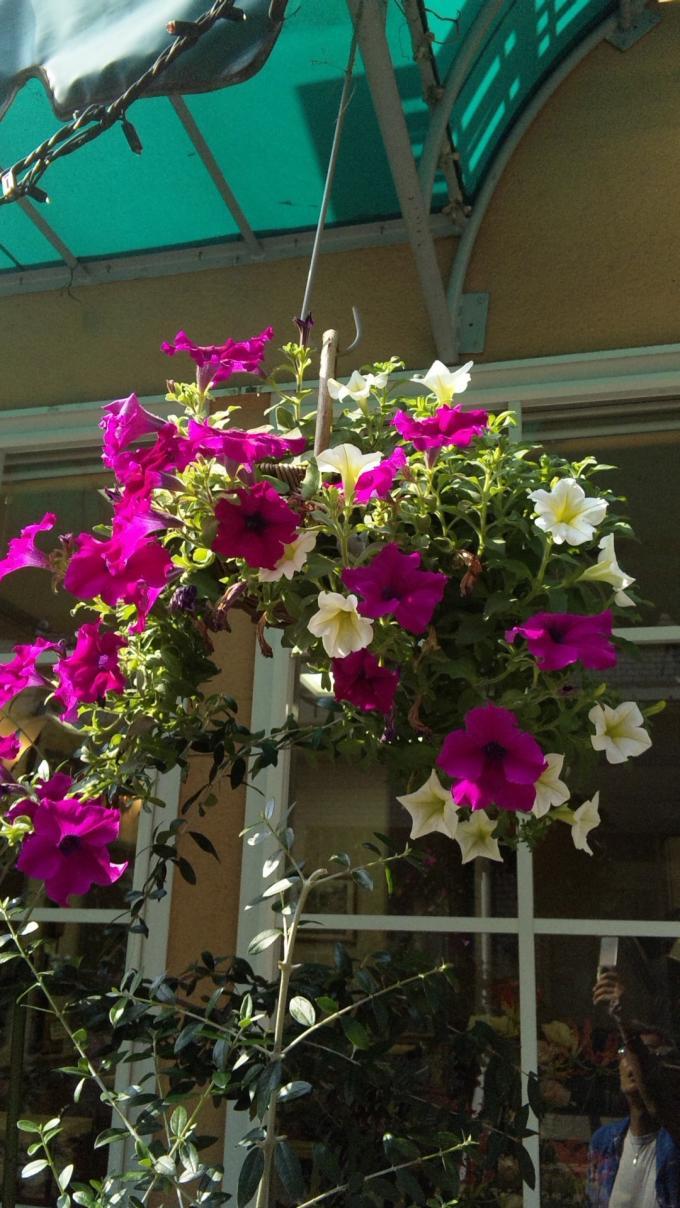FLOWER_20130804