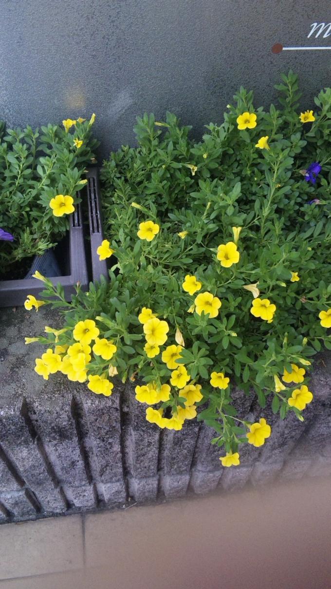 FLOWER_20130805