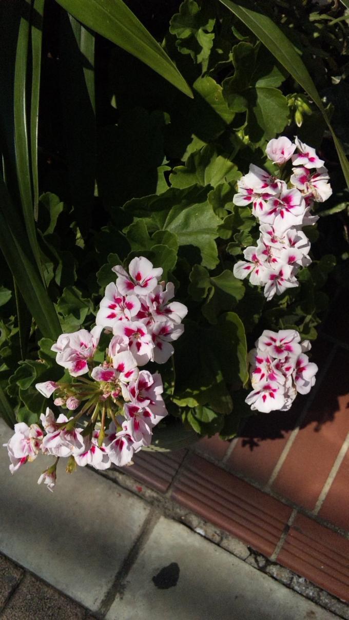 FLOWER_20130807