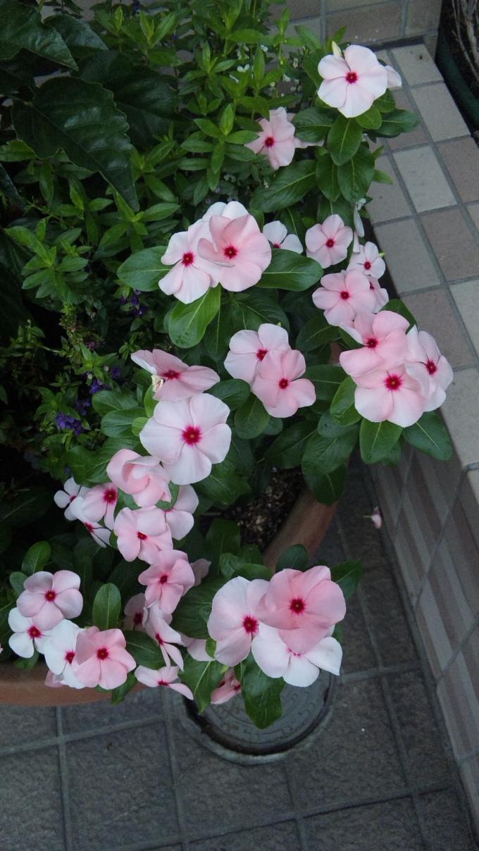 FLOWER_20130809