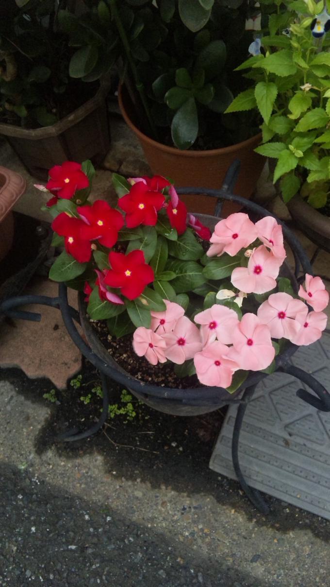 FLOWER_20130811