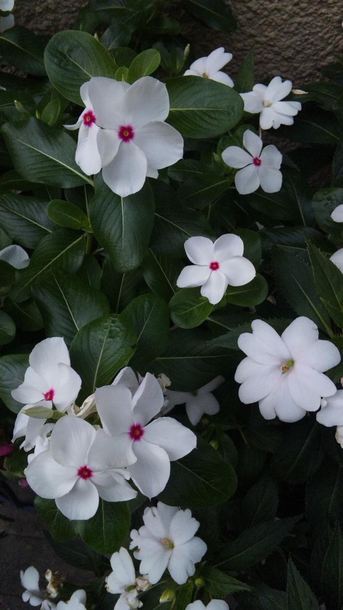 FLOWER_20130812