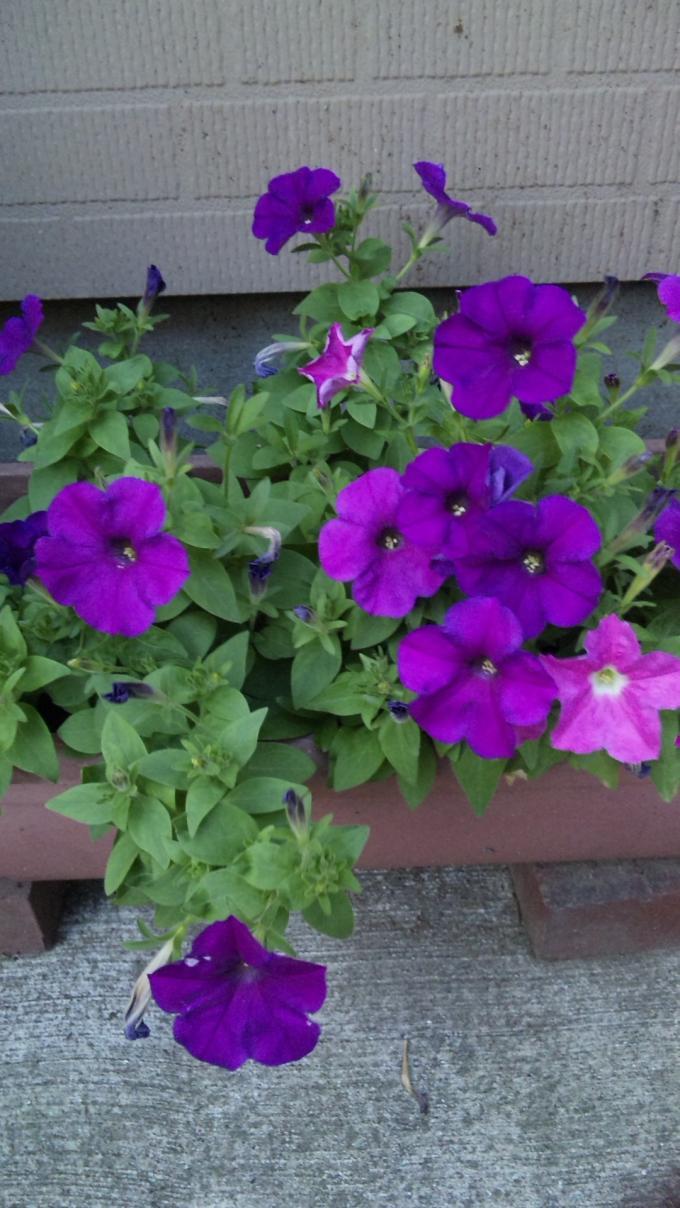 FLOWER_20130815