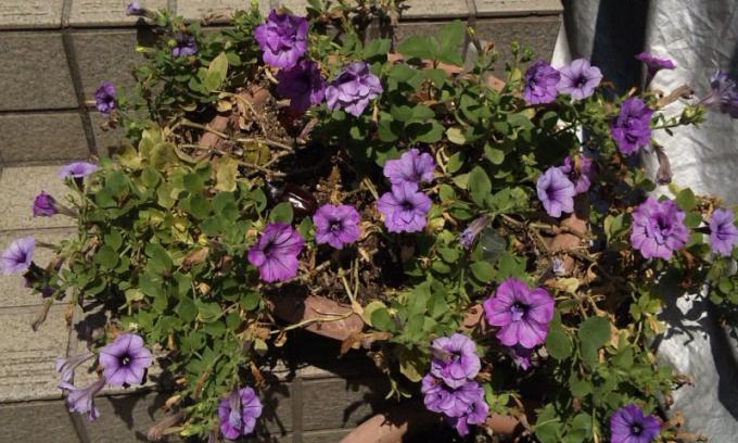FLOWER_20130816