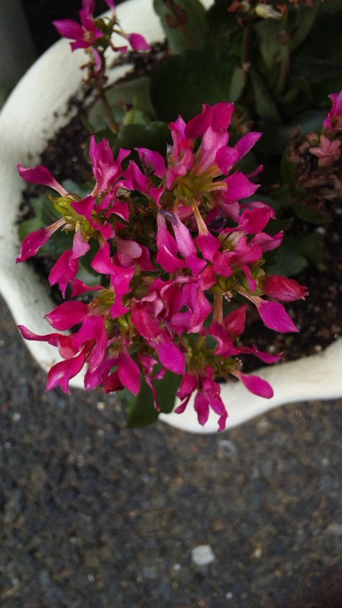 FLOWER_20130817
