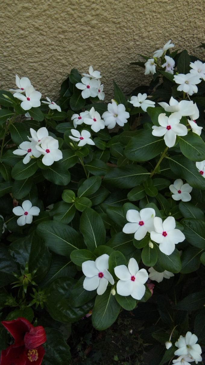 FLOWER_20130818