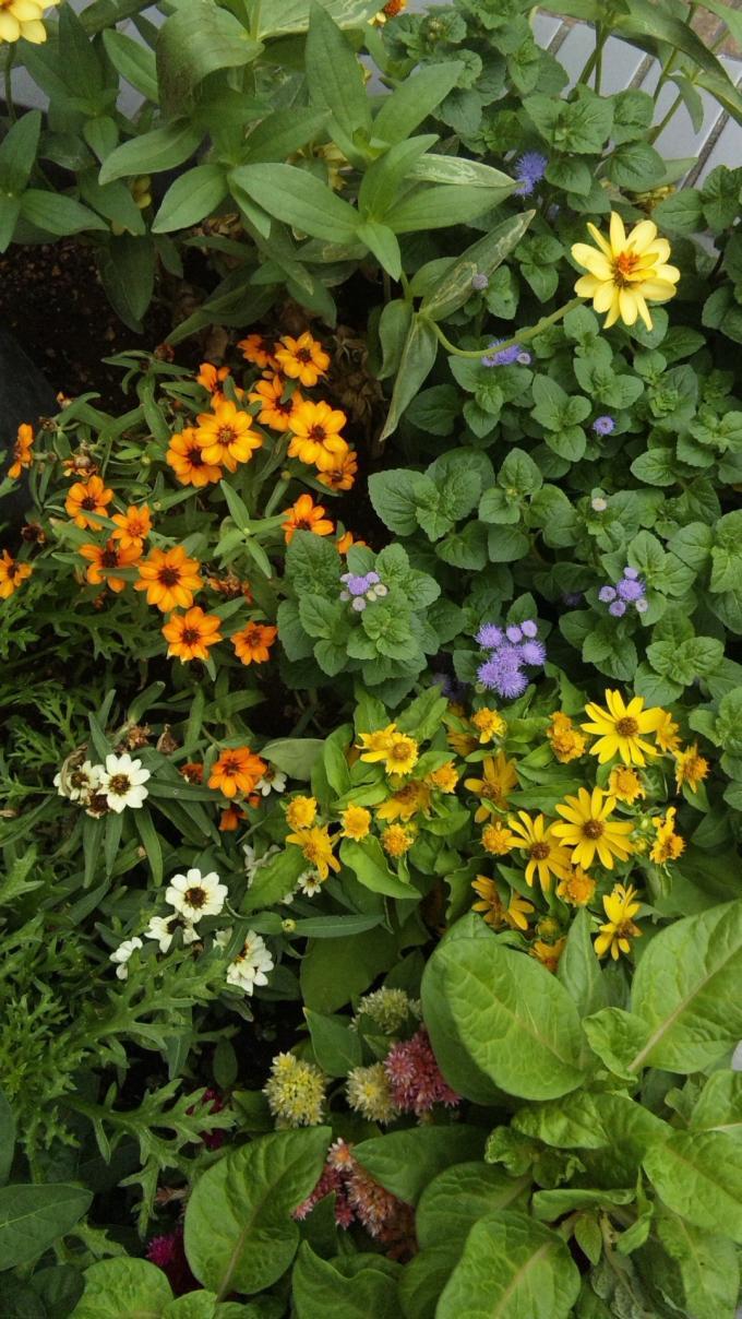 FLOWER_20130820